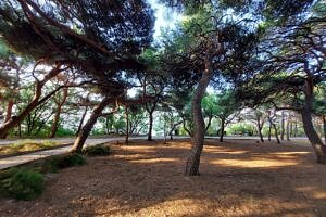 Форосский парк 9